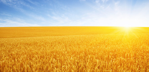 Photo sur Plexiglas Culture Wheat field and sun