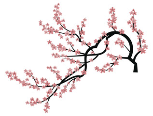 Blooming cherry. Sakura branch with flower buds. Cartoon drawing of a blossoming tree in spring. Logo with Japanese cherry blossoms. Tattoo. Wall art .