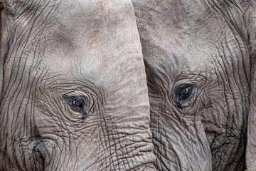 elephant eye close up in kruger park south africa