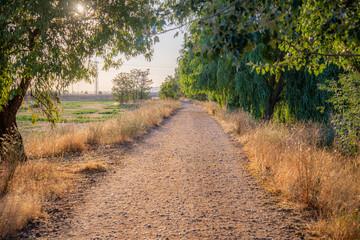 campo en verano con árboles y flores brotando