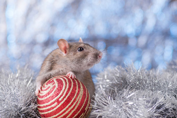 New Year concept. Cute white domestic rat in a New Year's decor. Symbol of the year 2020 is a rat. Gifts, toys, garlands, Christmas tree branches