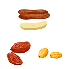 Fototapete - Vector illustration of fruit and dried sign. Collection of fruit and food stock symbol for web.