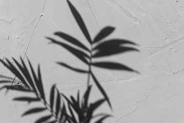 Selective focus on shadow of palm tree on a grey textured background. Natural day light, trendy picture, space for text