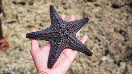 Foto auf Acrylglas Sansibar white male hand holding starfish, zanzibar