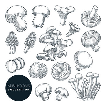 Mushrooms collection, sketch vector illustration. Hand drawn food ingredients isolated design elements