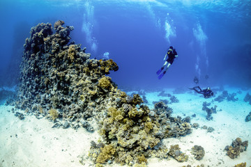 Underwater world. Diver and part of a sea reef. Wall mural