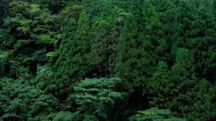 神秘的な森林