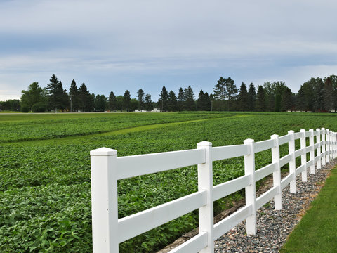 White fence on farm with green field with growing crop and trees in distance in spring time.