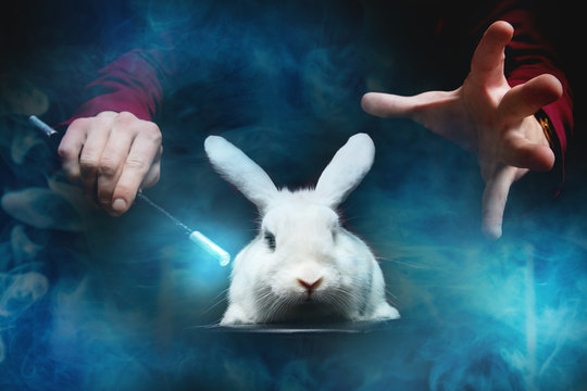 Magician man makes trick with white rabbit and magic wand, copy space black background