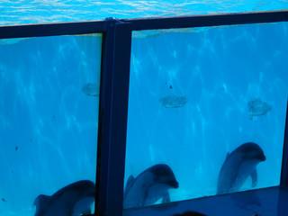 イルカ バブルリング 写真