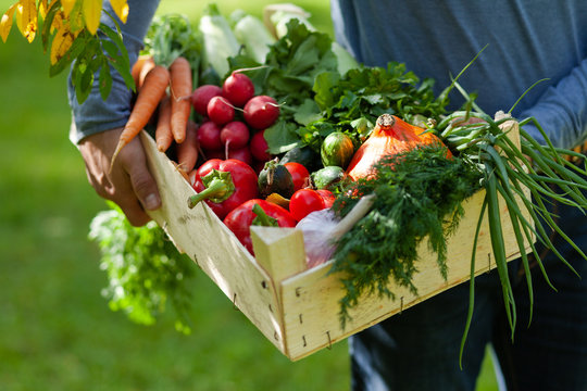 Strong farmer man in blue clothes is holding in his hands wooden case with ripe autumn vegetables. Carrot with tops, pink radish, red pepper, squash, cucumber, onion. Green background, Russia, Moscow