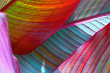 Wall Mural - background, colorful, leaves, illuminated, by, sun, large shot, macro