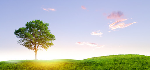 single tree on small hill and sunset with clouldy sky day