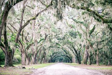 Fototapeta premium Klimatyczna południowa wiejska droga otoczona dębami i zwisającymi gałęziami ociekającymi hiszpańskim mchem w pobliżu Charleston w Południowej Karolinie, USA