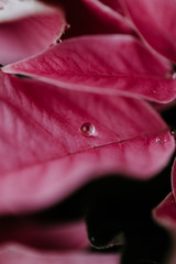 Macro shoot of pink plants and flowers inside the forest.