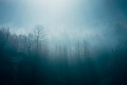 Ethereal morning landscape