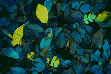 Abstract atumn leaves