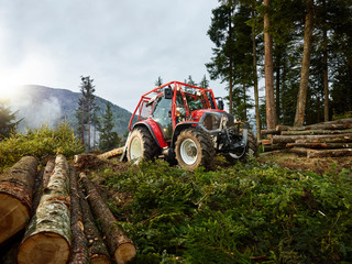 Tractor tugging tree trunks in a forest, Kolsass, Tyrol, Austria