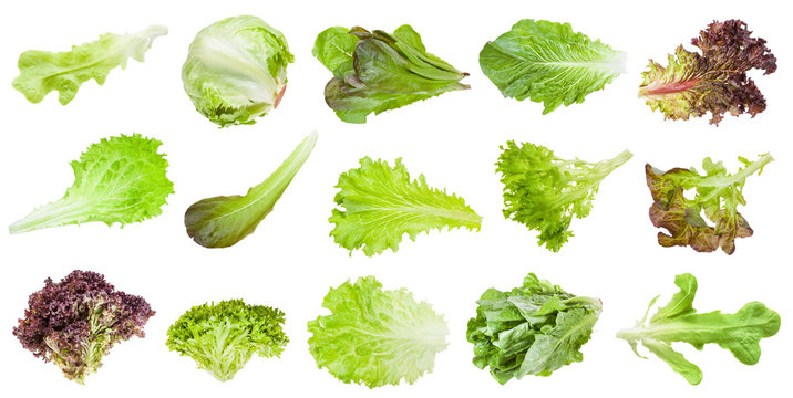 various leaves of lettuce vegetables isolated