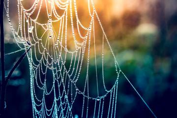 Morning dew on a web. Beautiful sunrise.