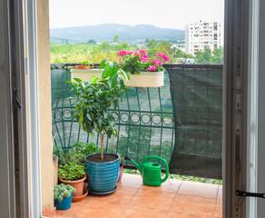 gardening in small urban garden on balcony