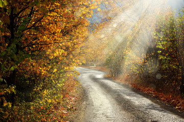 Landscape image of dirt countryside dirt road with colorful autumn leaves and trees in forest of Mersin, Turkey