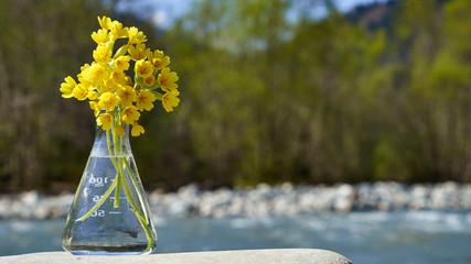 Glass bulb with yellow spring flowers.