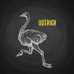 Bird ostrich animal in the style of chalk on a blackboard. Vector poster of running ostrich. The biggest and fastest bird on the world