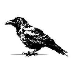 Silhouette of the crow standing. black and white isolated vector.
