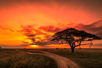 Obraz Beautiful sunrise over the plains of the Serengeti national park in Tanzania - fototapety do salonu