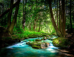 Poster Forest river Beautiful Mountain Stream Flowing Through the Northern Pennsylvania Hemlock Forest