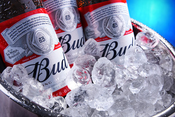 Bottles of Bud beer in bucket with crushed ice