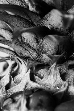 black and white close-up pinapple