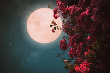Romantic night scene - Beautiful pink flower blossom in night skies with full moon. - Retro style artwork with vintage color tone.