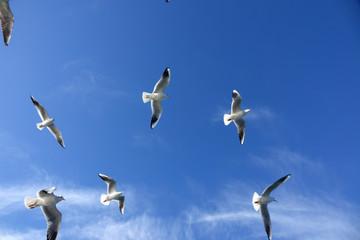 flying seagulls over sky
