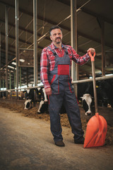 Farmer with showel in a cowshed on a dairy farm.