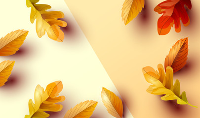 Autumn Background Composition with Leaves