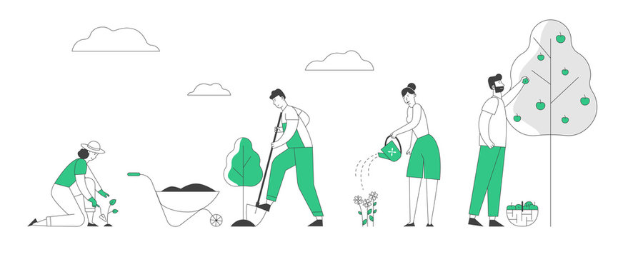 Man and Woman Farmers or Gardeners Planting and Caring of Tree Sprout and Pick Apple Harvest. Happy Couple Characters Harvesting Ripe Fruits in Summer Garden Cartoon Flat Vector Illustration, Line Art