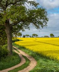 Path along the Oilseed Rape