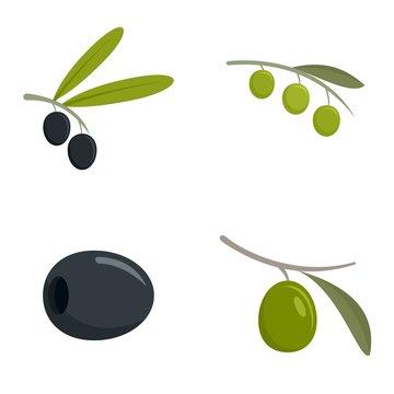 Festival olives oil icon set. Flat set of festival olives oil vector icons for web design