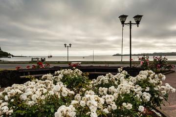 Jardín de rosas a a orillas del lago Llanquihue en la ciudad de Puerto Varas