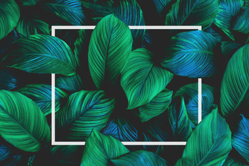 Fotomurales - tropical leaves with white frame, abstract green leaves, natural green background