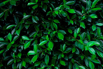 abstract green leaf natural background, tropical leaf, tiny green leaf