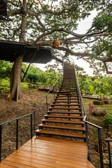 Escalera para subir a terraza sobre un gran árbol
