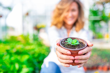 Smiling attractive young female employee at a flower nursery holding a potted plant for sale in her hands, glowing sun in the background