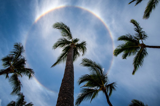 Low angle view of palm trees against rainbow in sky
