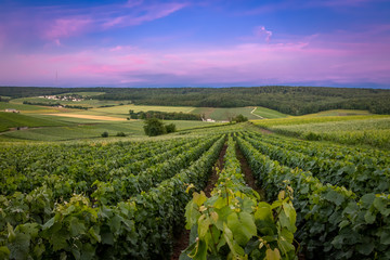 Obraz Fleury-la-Rivier, France - Sunset View of the Hillsides of Champagne (UNESCO World Heritage) - fototapety do salonu