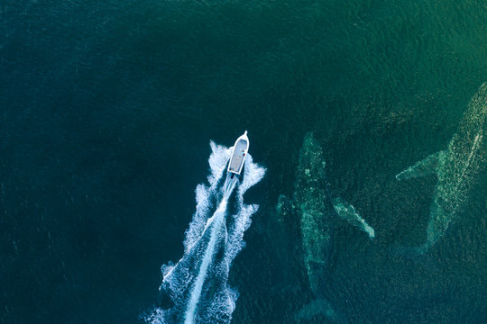 whale surfaces next to a fast boat
