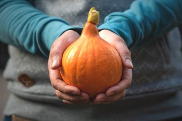 Hokkaido Kürbis frisch geerntet