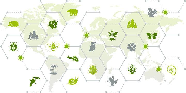 international wildlife / biodiversity icon concept – endangered animals icons with world map, vector illustration